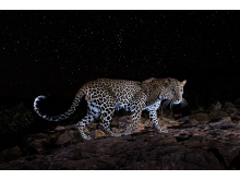 © Will Burrard-Lucas, United Kingdom, Shortlist, Professional competition, Wildlife _ Nature, Sony World Photography Awards 2021_4