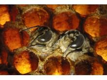 """Ausstellung """"Bienen - Die Bestäuber der Welt"""""""