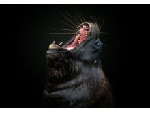 2620_1371915_0_ © Pedro Jarque Krebs, National Awards 1st Place, Peru, Shortlist, Open competition, Natural World _ Wildlife, 2019