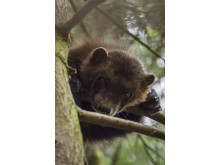 Sony Nature Wolverine_2