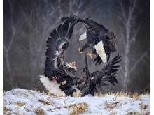 4131_11643_SandiLittle_Canada_Open_NaturalWorldWildlifeOpencompetition_2019