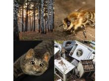 Kunskapskalaset. Collage Vår natur. Pressbild 2