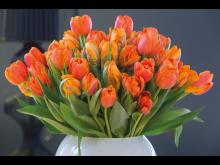 Svenskodlade tulpaner i orange nyanser passar på hösten