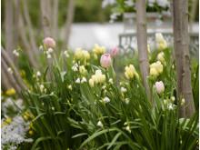Blomsterlöksplantering