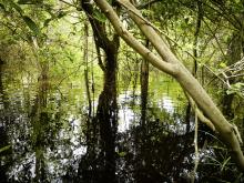 Katingan Mentaya – ett skogsskyddsprojekt på Borneo.