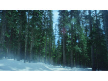 Sony 4K TVC Forest
