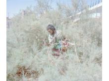 4593_6_13427_HashemShakeri_Iran_Professional_Documentary_2019