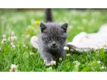 Kattunge på gräsmatta