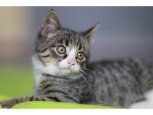 Ta med katten på bilturen – tänk på detta