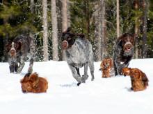 Studiefrämjandets hundverksamhet
