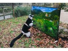 Sony 4K_Lemur in Zoo