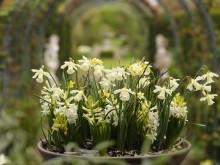 Näpna lökväxter i ljusa färger