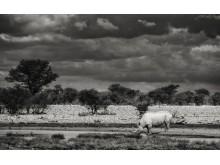 CS-301116-namibia_rx10-166