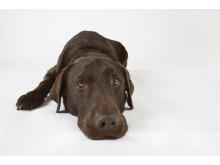 Ormbett drabbar 2 000 hundar årligen