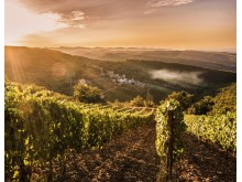 Monteraponi vineyard