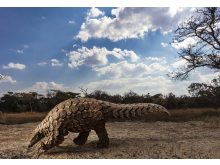 ©  Brent Stirton, South Africa, Category Winner, Professional competition, Natural World & Wildlife, 2020 Sony World Photography Awards