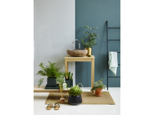 Grønne planter på badet