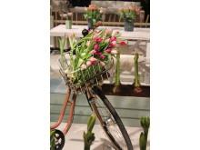 Tulpaner på lök i cykelkorg