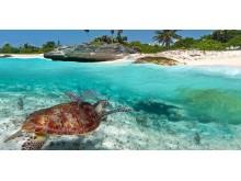 Caribbean_Illustration-Photo_Mexico