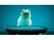 GTK-XB7 von Sony_Animal_Campaign_2