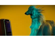GTK-XB7 von Sony_Animal_Campaign_3