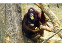 PI-Zoo-DARWINEUM-72-2017_Taufe_Hsiao-Ning_Niah_Zoo Rostock_Kloock_01