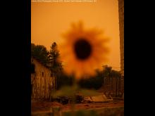 Sony World Photography Awards 2021, Student © Tayla Nebesky (UWE Bristol, UK) (10)