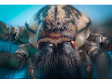 What's bugging you at home this winter? House Spider