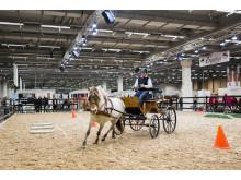 Fjordhästföreningen har uppvisning på EuroHorse 2014