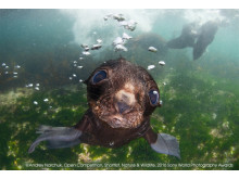 ©Andrey Narchuk, Open Nature & Wildlife category, 2016 Sony World Photography Awards