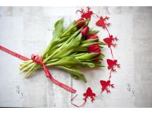 Jul med svenska tulpaner!