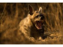SWPA2019_Sohail Inzaman_India_Open_Natural World Wildlife
