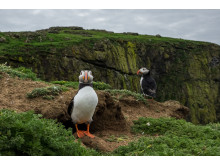 ©Sam Hobson_UK_SonyNaturePuffin5
