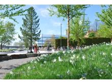 Årstidernas park, centrala Umeå