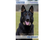 PD Ziggy