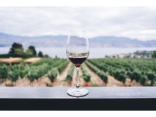 Wine_Winery_TWC