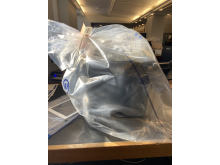 Police seizures NW London - Large container of cannabis.jpg