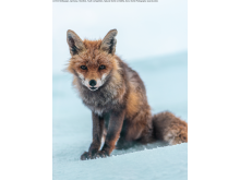 Sony World Photography Awards 2021 © Emil Holthausen, Germany, Shortlist, Youth competition, Natural World & Wildlife