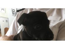 Puppy: Alvanley Road