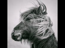 © Michael Faint, United Kingdom, Shortlist, Open competition, Natural World & Wildlife, SWPA 2020