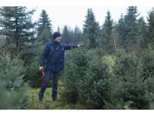 Weihnachtsbaum-Schlagen