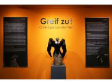 """""""Greif zu! - Greifvögle aus aller Welt"""": neue Ausstellung im Naturkundemuseum Leipzig"""
