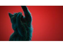 GTK-XB7 von Sony_Animal_Campaign_5