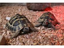 20190122-fergie-tortoise-sxp201809081245