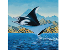 Ballast Point Manta Ray - artwork