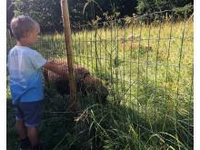 djurstängsel och får