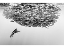 SWPA2019_© Christian Vizl, Mexico, 2nd Place, Professional competition, Wildlife , 2019 Sony World Photography Awards (2)