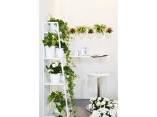 Att inreda med växter - med växter