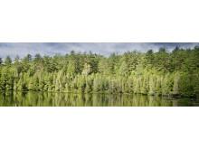Skogsmark-halvar-2017_700x225-utan-text