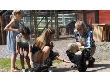 Äventyrare Skånes Djurpark